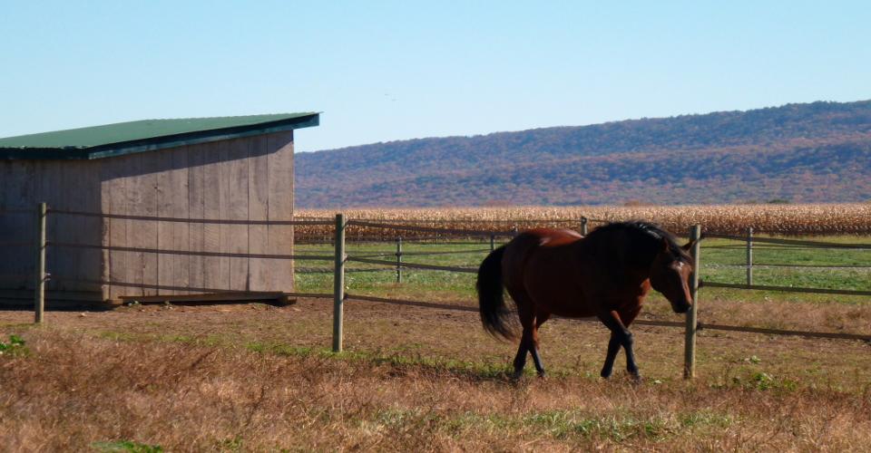 Equestrian Estate, Farmette, agricultural land, Farms